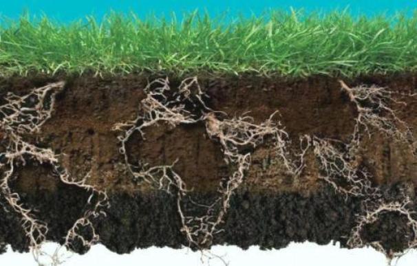 Toprağa dayalı politikalar