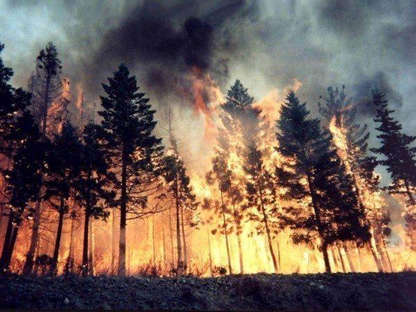 tunceli dersim iç güvenlik yasası olağanüstü hal ohal özel güvenlik bölgesi alanı terör pkk munzur orman yangınları köy boşaltma seyahat özgürlüğünün sınırlandırılması