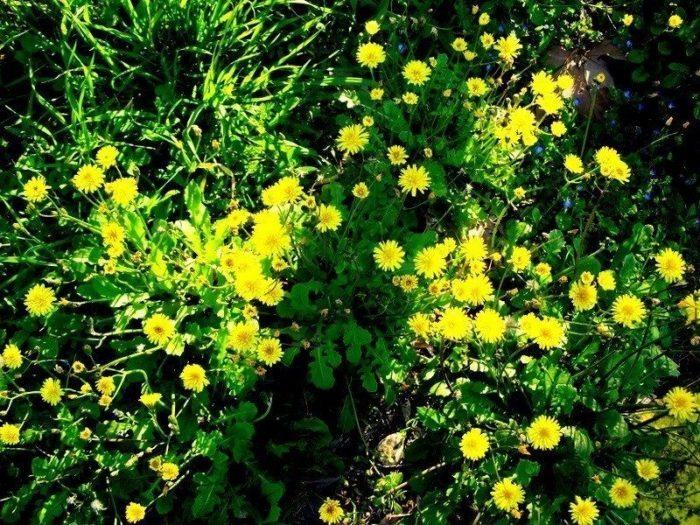 hayat hayatın renkleri çiçekler sarı