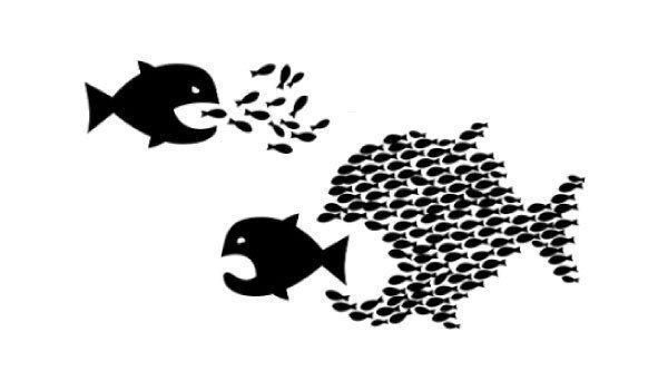 küçük balık büyük balığı nasıl yer kapak