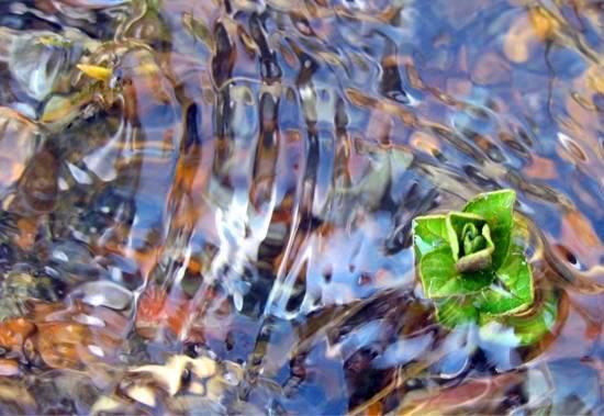 """Fotoğraf: Foto: Merve Köse """"Su, aktıkça canlılara hayat taşır"""" Kazıklı Ali Boğazı, Çamardı."""