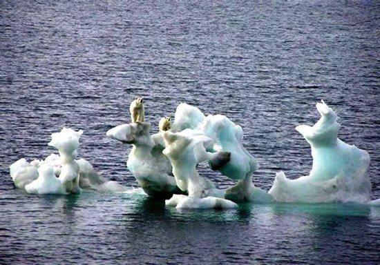 kuresel isinma iklim degisimi kutuplar kutup ayilari