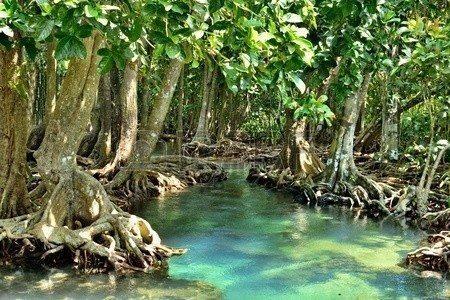 mangrov ormanları nehir bataklık ormanları