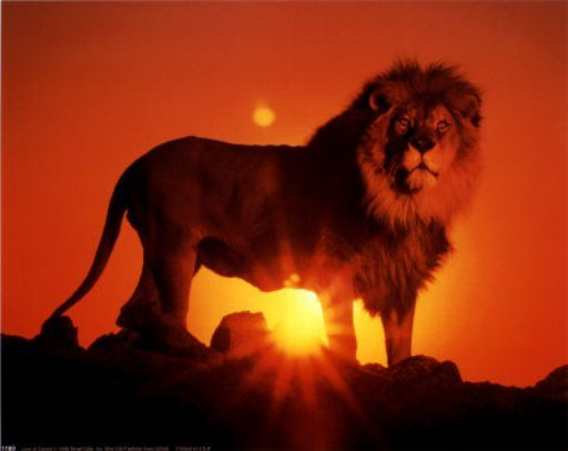 aşk aslan coşku tutku
