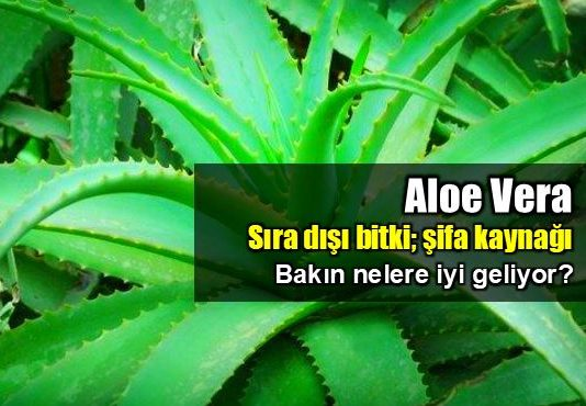 Aloe Vera'nın mucizevi faydaları