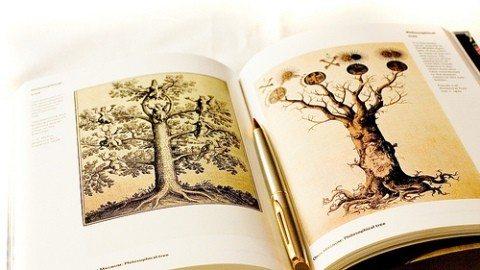 hayat ağacı anadolu mistikleri