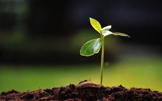 kırsalı canlandırma projesi dünya toprak günü Kırsala Dönüş Projesi