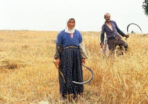 kirsal_tarim_tekstil_turkiye_anadolu_18_002 Kırsala Dönüş Projesi