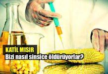 Katil mısır: Ne yediğinizi biliyor musunuz?