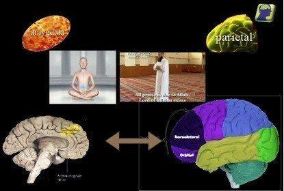 meditasyon beyin prefrontal korteks parietal bölge amygdala ve anterior singulattan oluşan devre