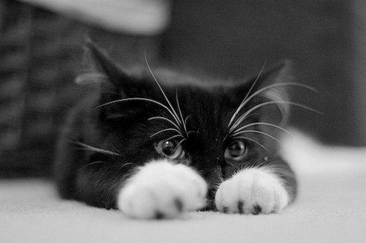 aşk kedi yaşam