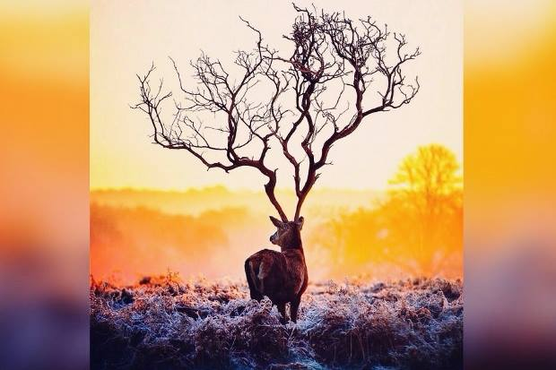 2016 yeni yıl doğa çevre ekosistem insa dünya yok olursa