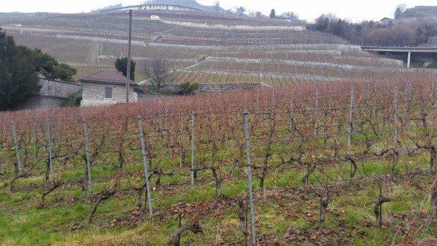 şarap bağları fransa