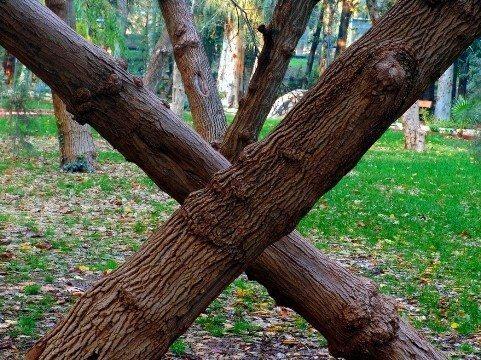 ağaç foto irfan yurtbahar