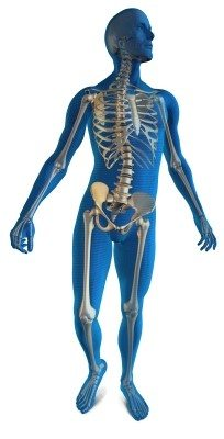 bel aprısı iskelet omurga