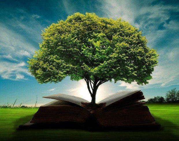 Bilgi bilgeliğe nasıl dönüşür? - İndigo Dergisi