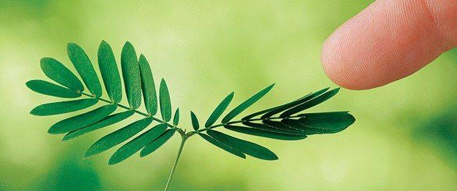 bitkilerin dişilik hormonu bitkiler virüs enfeksiyon