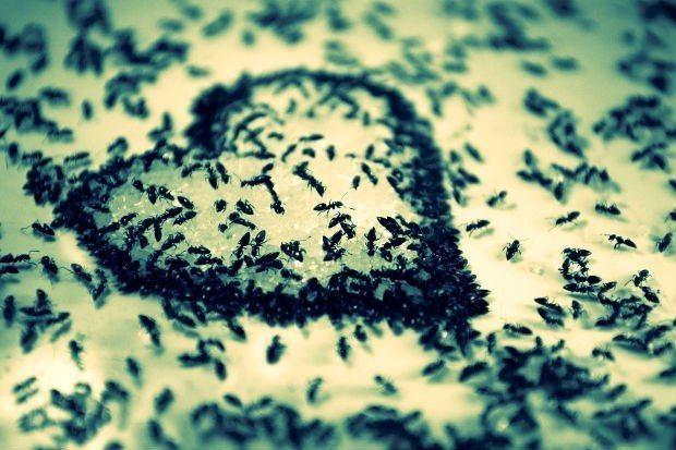 karınca kuran mesaj tefsir okumak anlamak türkçe arapça islam kuran-ı kerim ayet meal sure