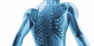 kas iskelet sistemi yorgunluk sağlık türkiye