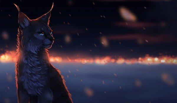 yazar kedi tanrı