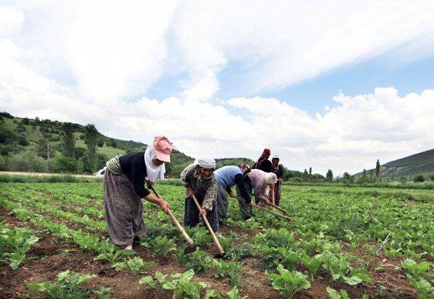 tarım eğitimi
