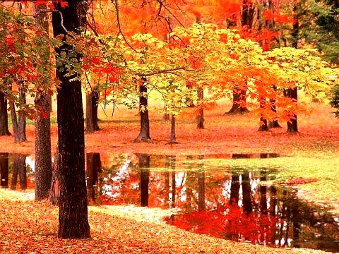 yaprak çöp doğa orman azot