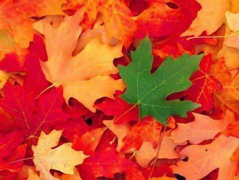 yaprak çöp doğayaprak çöp doğa orman azot orman azot