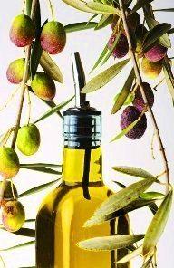 zeytin ağacı zeytinyağ zeytin nasıl yetişir iklimi meyvesi