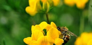 bitkiler çevreci kimya mühendisi bitkilerin faydaları