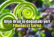 Fibonacci ve Altın Oran'ın doğadaki yeri