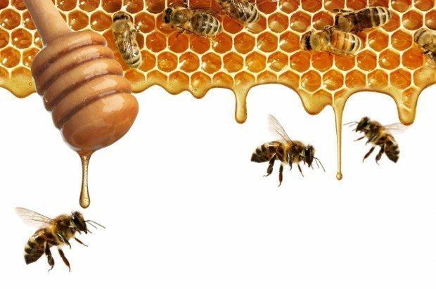 bal arı ürünleri balın sahtesi olur mu