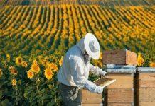 bal arı ürünleri üretici balcı balın sahtesi olur mu