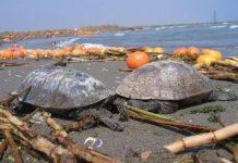 Denizlerde ne kadar plastik var, 2050'de ne kadar olacak? Bilmiyoruz ama muhtemelen çok olacak. Plastik sayısı balık sayısını ne zaman geçecek?