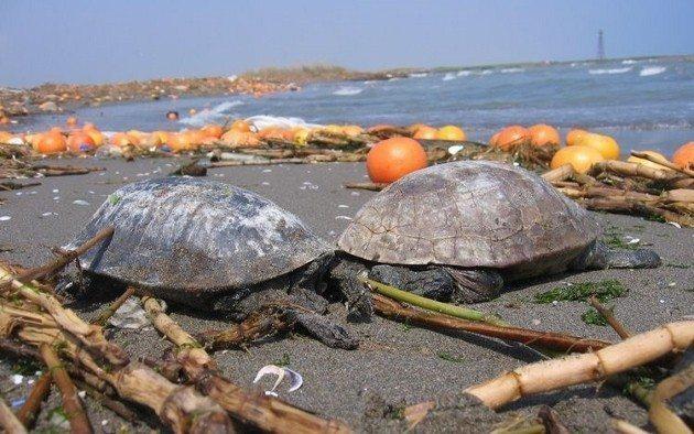 Denizler için en büyük tehlike plastik değil cehalet