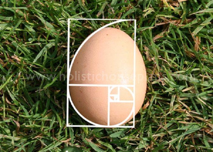 yumurta fibonacci