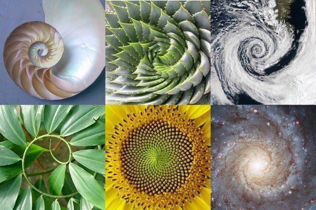 altın oran fibonacci doğa ağaç çiçek dal yaprak
