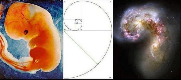 fibonacci yaratım allah