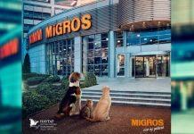 migros hayvan barınak haytap son kullanma tüketim tarihi ürünler gönüllüler