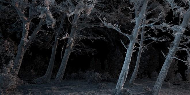 Monochrome: Doğanın Digital Sanatla Buluşması