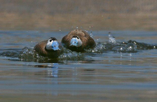 sulak alanlar yok oluyor hangi hayvanların soyu tükeniyor