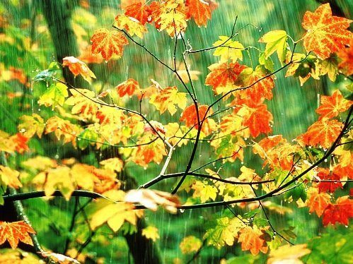 yağmur-yağmur suyu-yağış miktarı-yağmur suyunun faydaları