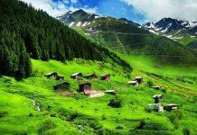 tema vakfı Orman ve su varlıkları için harekete geçme çağrısı türkiye karadeniz ormanları