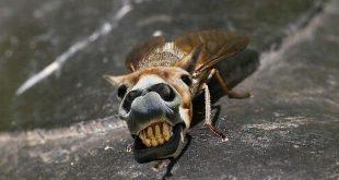 evet biz hainiz at sineği