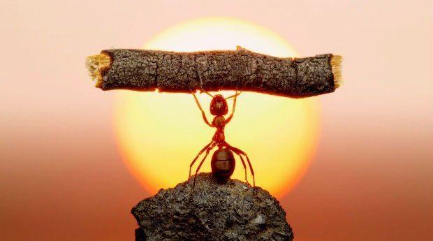 Hayat her insana bir baht çizer işe saygı çalışan karınca gençlik
