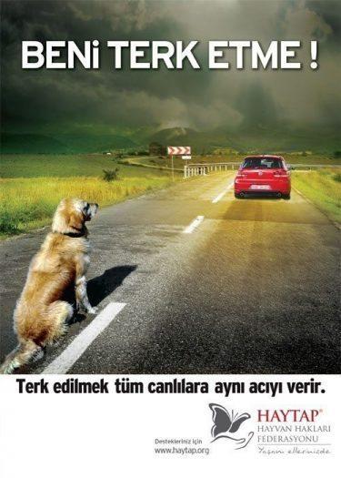 hayvan hakları sokak hayvanları haytap beni terk etme