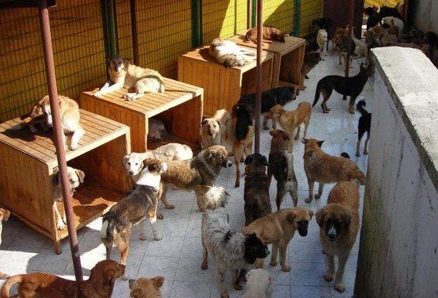 hayvan hakları sokak hayvanları