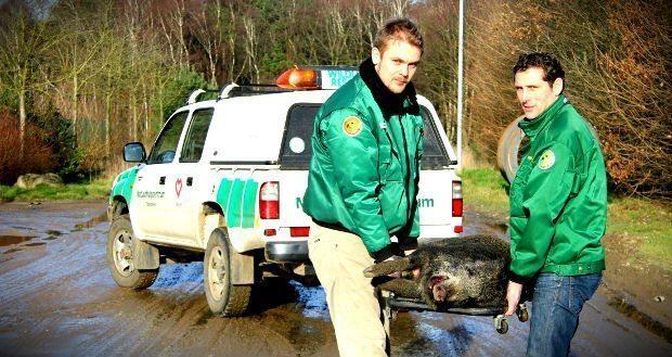 WWF Türkiye yaban hayvanlarına ilk yardım eğitimi