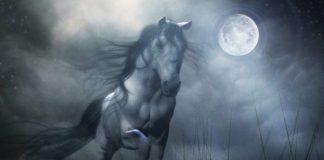 atlar şehit sayılmaz mı?