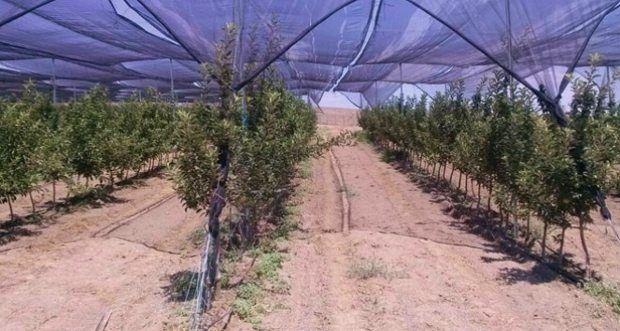 Güneş destekli organik elma yolda!