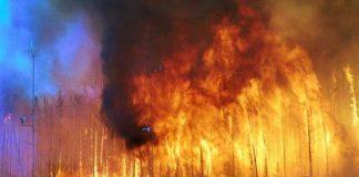 Kanada Alberta'da yangın; 60 - 100 bin kişi tahliye edildi